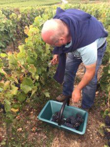 vendanges champagne, vignes, raisin, vendanger avec impériale