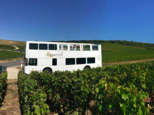 soleil, vigne, tourisme, Hautvillers