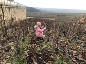 champagne, visite, cave, dgustation, famille, originale,epernay, reims